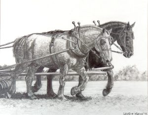 Drawing of a Team of Draft Percheron Horses