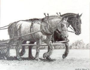 Drawing of a Team of Draft Percheron Horses