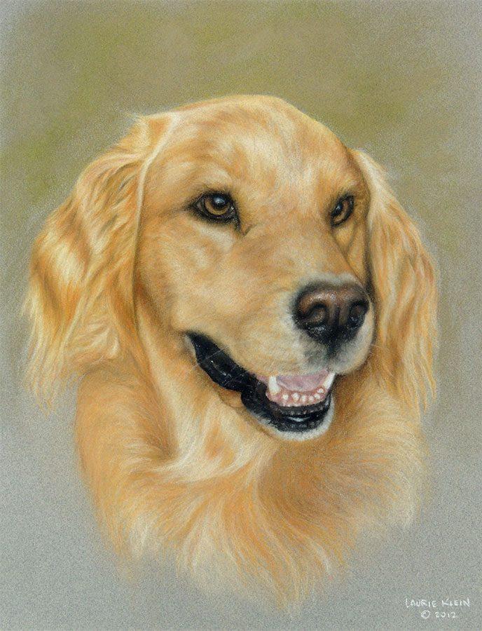 Lucy - Golden Retriever Portrait