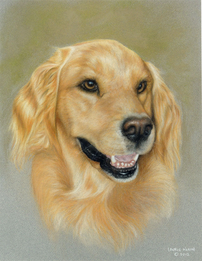 Lucy - Golden Retriever Portrait