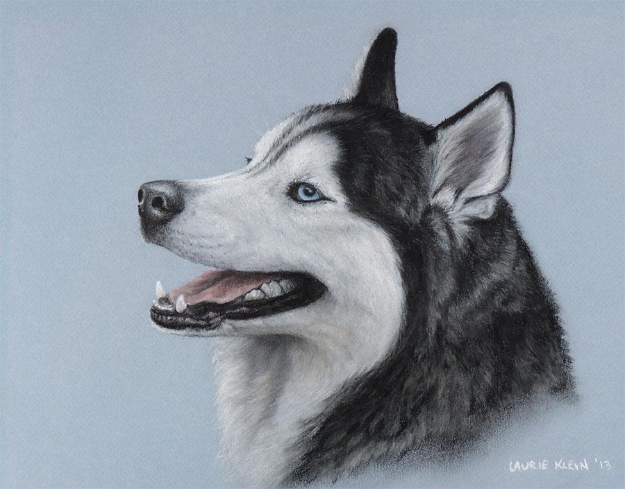 Denali - Siberian Husky Portrait